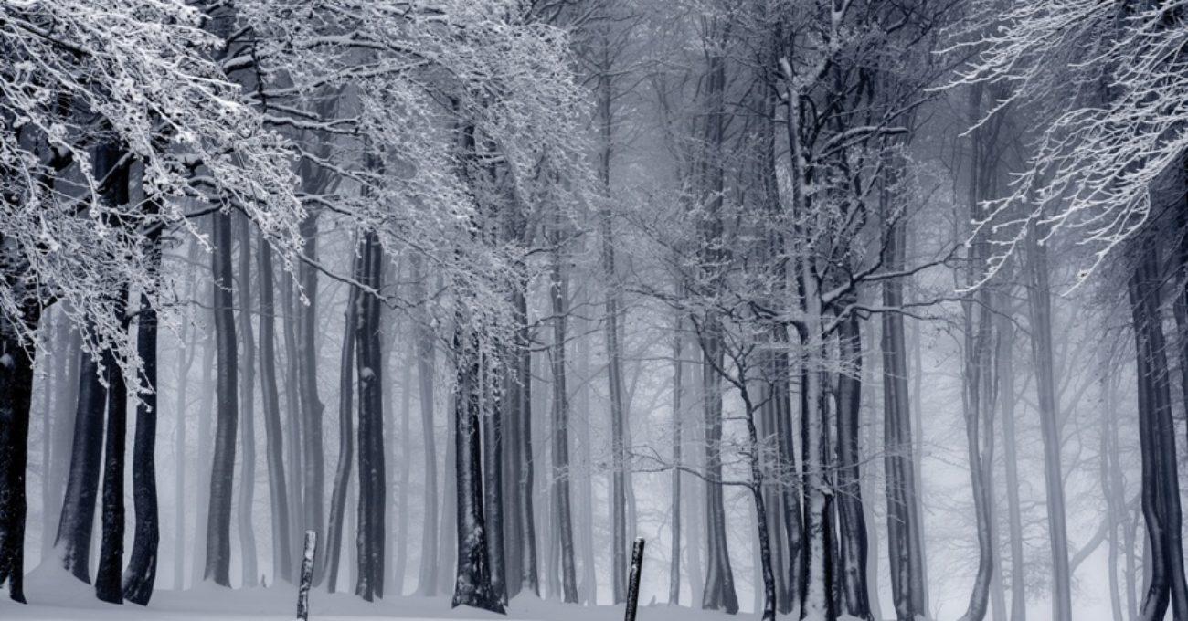 teama-de-iarna