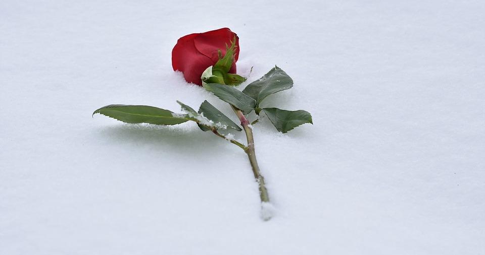 Iarna şi iubirea- catrene — Alexandra Mihalache