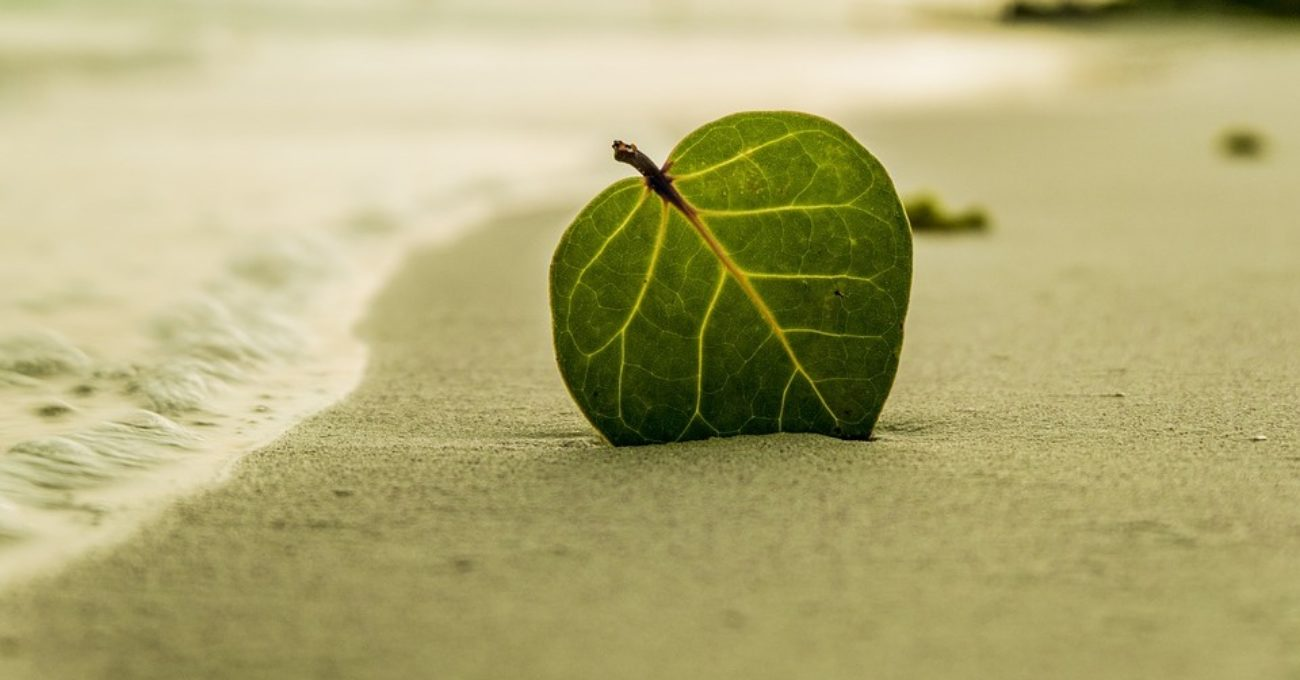 Frunza verde, dor in vant - poezie de Alexandra Mihalache