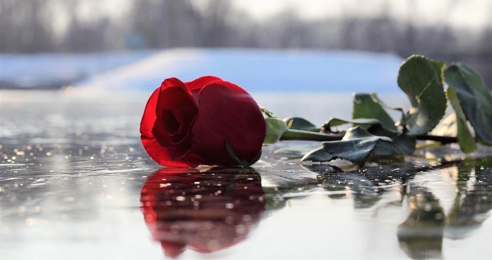 Trandafirul - poezie de Alexandra Mihalache