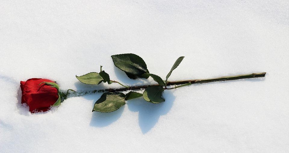 Pentru tine, pentru noi - poezie de Alexandra Mihalache