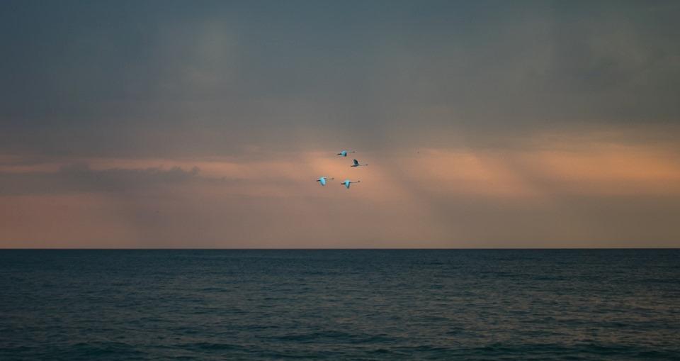 Prea mult, prea putin - poezie de Alexandra Mihalache