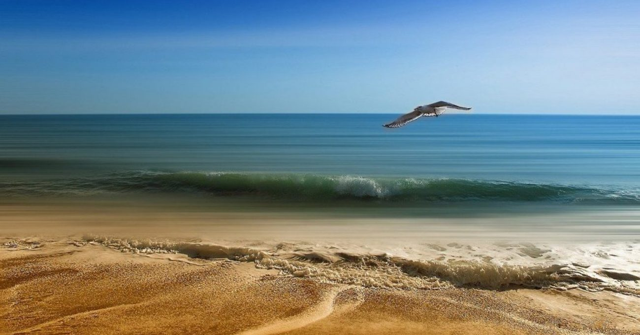 Dreptul-la-viata-poezie-de-Alexandra-Mihalache